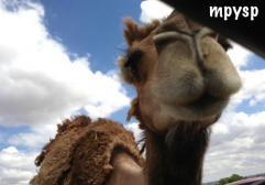 Safari Madrid con niños